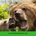 Best Bear Spray For Hiking